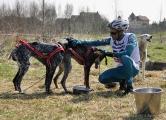 16 i 17 kwietnia 2011 Wyścigi psich zaprzęgów