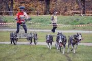 6 listopada 2010 Psie zaprzęgi (I)